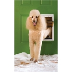 PetSafe Extreme Weather Pet Door - Large