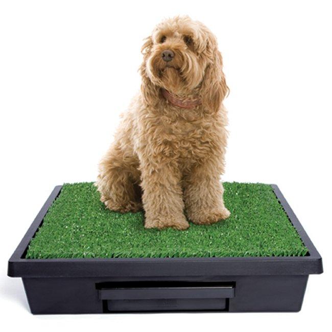 Large Pet Loo Dog Potty Training System Pwm00 14499
