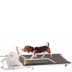 PetRun PR720F Dog Treadmill By GoPet Folds Up Out of The Way!